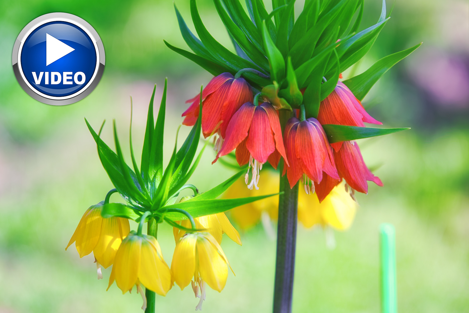 Luminar AI Spring Colors Templates from PixaFOTO.com | VIDEO